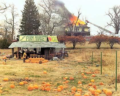 sternfeld_pumpkins.jpg